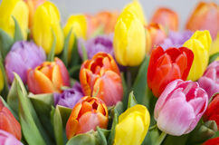 Bunch of colourful tulips. Spring and easter flowers Stock Photos