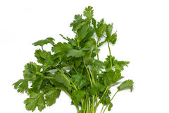 Bunch of coriander Stock Photography