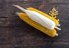 Bunch of corn cobs on a wooden background Stock Image