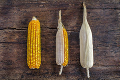 Bunch of corn cobs on a wooden background Stock Photo