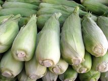Bunch of corn on display Royalty Free Stock Images