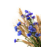 Bunch of cornflowers and ears isolated on white background Royalty Free Stock Photography
