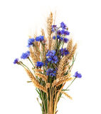 Bunch of cornflowers and ears isolated on white background Royalty Free Stock Photo