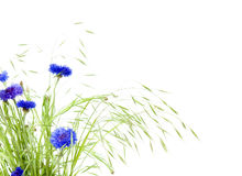 Bunch of cornflowers and grasses stock photos