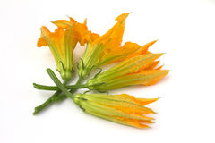 Bunch of courgette flowers Stock Image