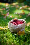 Bunch of cranberries Royalty Free Stock Photo