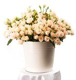 Bunch of creamy roses in a bucket over white Stock Images