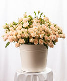 Bunch of creamy roses in a bucket Royalty Free Stock Image