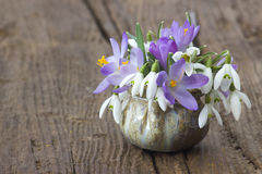 Bunch of crocus and snowdrops in a vase Stock Photography