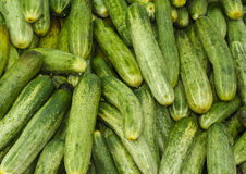Bunch of cucumber. Bunch of farm fresh cucumber Stock Images
