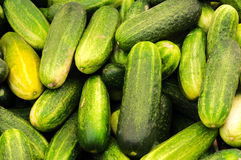 Bunch of cucumber Royalty Free Stock Photography