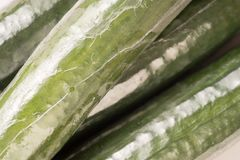 Bunch of cucumber wrapped in plastic films. Close up and background Royalty Free Stock Image