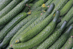 A bunch of cucumbers Royalty Free Stock Photography