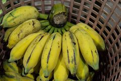 Bunch of cultivated banana. Bunch of yellow cultivated banana in plastic basket stock images