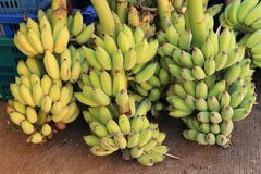 Bunch of cultivated bananas or Thai bananas on the floor royalty free stock image