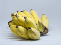 The bunch of cultivated bananas on the white background. Stock Photos