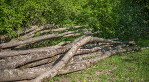 A bunch of curves fallen oak trunks Royalty Free Stock Photos