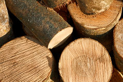 Bunch of cut firewood logs Stock Photos