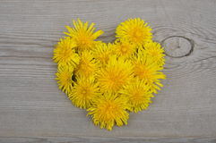 Heart shaped yellow flowers Royalty Free Stock Photos