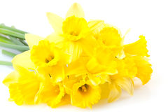 A bunch of daffodils Stock Image