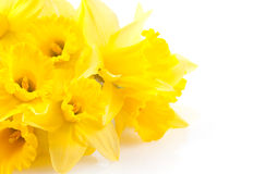 Bunch of daffodils Stock Photography