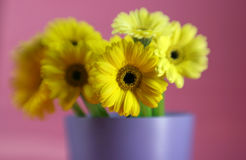 Bunch of Daises Royalty Free Stock Images