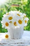 Bunch of daisies in the garden Stock Photo