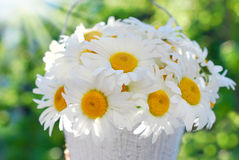 Bunch of daisies in the garden Royalty Free Stock Image