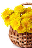 Bunch of dandelions. In a basket Stock Images