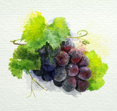 Bunch of dark grape on a white background. watercolor painting Stock Photo