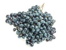 Bunch of dark grapes Royalty Free Stock Images