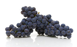 Bunch of dark grapes on a white background Stock Image