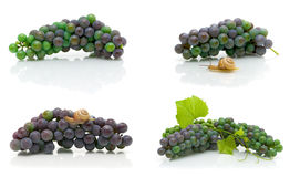 Bunch of dark grapes on a white background. Royalty Free Stock Photo