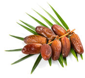 Bunch of date fruits Royalty Free Stock Photo