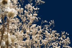 Bunch of delicate dry plants Royalty Free Stock Photos