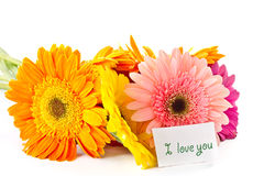 Bunch of different colored gerbera Royalty Free Stock Images