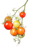 Bunch of different colored tomatoes. Isolated on white Royalty Free Stock Photos