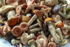A variety of edible wild mushrooms. stock images