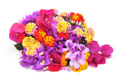 Bunch of different flowers Royalty Free Stock Images