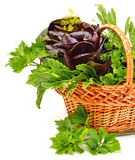 Bunch of different red and green  lettuce, spinach with parsley Royalty Free Stock Photo