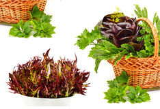 Bunch of different red and green  lettuce, spinach with parsley Stock Photography