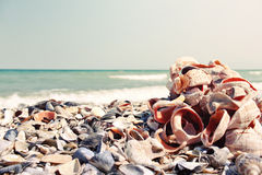 Bunch of different sea shells Royalty Free Stock Photos