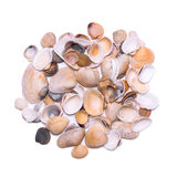 A bunch of different seashells isolated on white background. Royalty Free Stock Photography