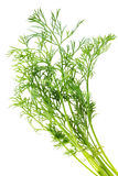 Bunch of dill Stock Photography