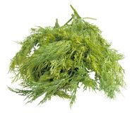 Bunch of dill. Isolated on a white background Royalty Free Stock Images
