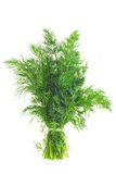 Bunch Of Dill. Isolated On White Royalty Free Stock Images