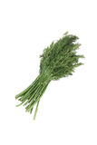 Bunch dill herb Royalty Free Stock Photo