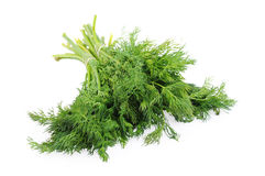 Bunch of dill isolated on the white background.  Stock Image