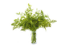 Bunch of dill isolated on white background. Bunch of fresh dill isolated on a white background Stock Image