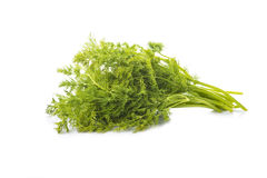 Bunch of dill isolated on white background. Bunch of fresh dill isolated on a white background Royalty Free Stock Photo